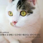 고양이가 이뻐도 좋은 카메라와 보정은 필수