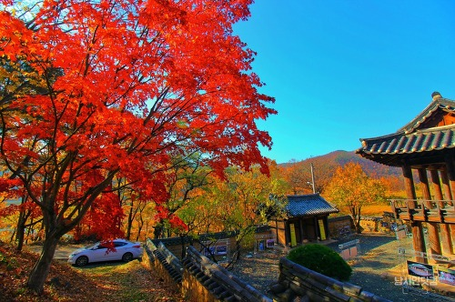 안동 묵계서원의 가을 풍경