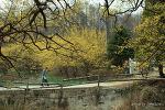 2013 양평산수유축제 사진촬영대회 우수상 수상