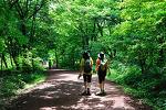 [제주] 아름답고 향기로운 길(사려니숲길)