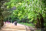 봄날 싱그러움 가득한 오대산 월정사 전나무숲길