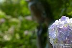 부산 태종사 수국축제 화려한 여름꽃들의 축제가 펼쳐진다