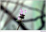 아지트의 봄
