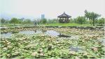 삼락공원 연지(蓮池)와 팔각정