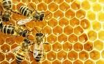 꿀은 어디에 좋을까~