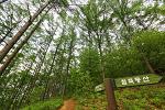장흥자생수목원의 철쭉