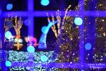 울산대공원 장미원 빛축제, 따뜻한 빛으로 가득한 연말 여행