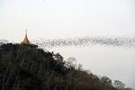 랏차부리 박쥐사원 '왓 카오 쫑 프란'(Wat Khao Chong Phran)
