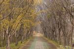 경주 산림환경연구원의 봄, 이번 주말이 정말 좋을 것 같아~