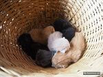 도대체 몇 마리야? 우리가 11마리 고양이를 키우는 이유
