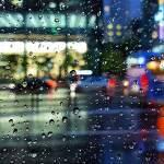 유화같은 비오는 날의 사진들