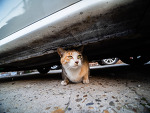 거리의 고양이 4/Cats in the street 4