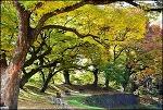가까운곳에서 즐기는 동네 단풍-옻골마을 비보숲,침산공원,엑스코 주변 도로