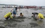 고창 갯벌 축제는 태고의 생명이 살아 숨쉬는 갯벌을 조명한다.