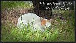 전주 예식장에서 발견한, 전주 예식장 고양이.jpg