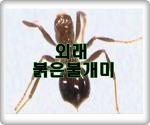 외래붉은불개미 공포 이젠, 한국에 상륙