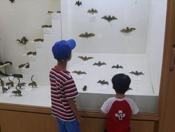2010. 8. 경희대학교 자연사박물관
