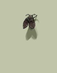 나방 파리 (화장실 검은 벌레)