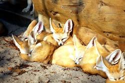 에버랜드 낮잠 자는 동물들