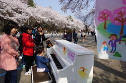 서울대공원, 여의도 벚꽃축제