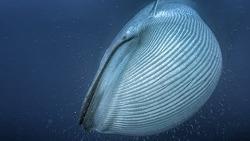 고래는 어떻게 거인이 되었나?