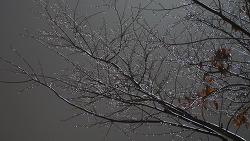 비, 머금다.