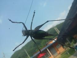 메뚜기가 너무 커서