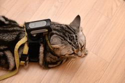고양이가 바라보는 세상은 어떨까?