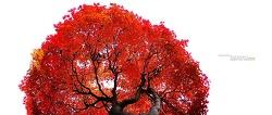 하트 단풍나무를 보며 누웠다^^