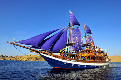 Dive Komodo with Sea Safari Cruises, Indonesia
