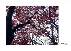 가을을 느끼며...#6