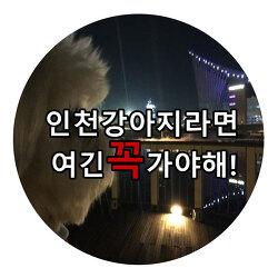 인천 강아지산책공원 여긴꼭가야해 베스트5