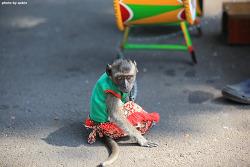 [인도네시아 자카르타 여행] 옷입은 원숭이