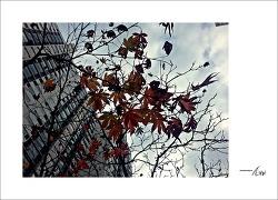 가을을 느끼며...#5