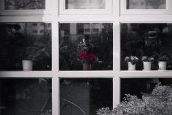 X-Mas Flowers