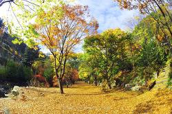 Into the Autumn