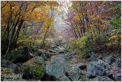 명지산-등산로 풍경