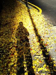 낙엽은 쌓이고