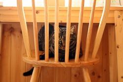 의자 감옥에 갇힌 초동이~ㅋ