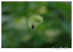 강아지풀의 꽃말은 동심 그리고 노여움