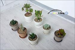 2017-10-28 / 다육 식물, 화분 구입 및 분갈이