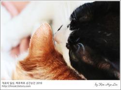 [적묘의 고양이]애정뿜뿜,묘르신, 남매고양이가 늙어간다는 것,19살고양이,14살고양이