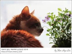 [적묘의 고양이]묘르신,초롱군의 역할,거실 인테리어 필수요소, 꽃과 나비