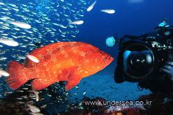 Dive Yakushima, Japan