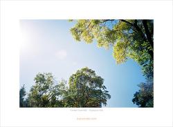 [Kodak Gold 400][Olympus XA] 지난 가을의 추억