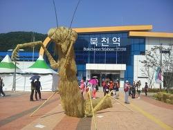 하동 북천코스모스메밀꽃 축제 0925