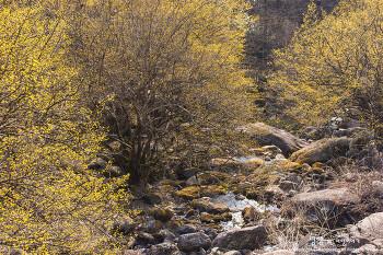 구례 산수유꽃축제 상위마을, 계곡이 온통 노란색으로 물들기 시작!
