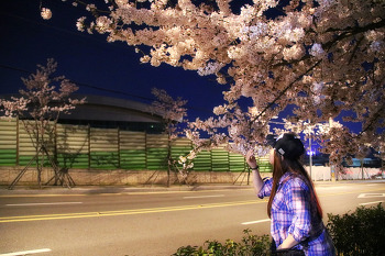 여수벚꽃길 중앙여고 앞 출사. 넘나 예쁜 야경도 함께