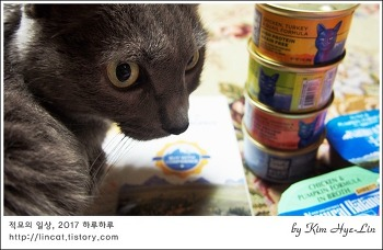 [적묘의 고양이]고양이주식캔,내추럴 발란스,우수후기 상품도착