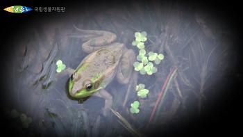 지구촌 생물올림픽, 생물다양성협약 당사국총회 D-6